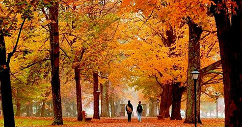 Image of students walking in the fall